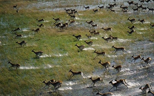 世界最大内陆三角洲:奥卡万戈三角洲